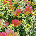 English Spring by Ann Horn