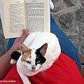 Enjoying Reading by Alexandros Daskalakis
