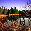 Enjoying The View At Grace Lake by Joyce Dickens
