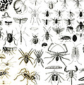 Entomology Myriapoda And Arachnida  by English School