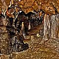 Entrance. Florida Caverns. by Chris  Kusik