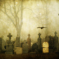 Enveloped By Fog by Gothicrow Images