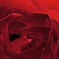 Enveloped In Red by Phyllis Denton
