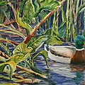 Environmentally Sound - Mallard Duck by Roxanne Tobaison
