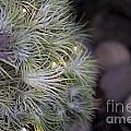 Epiphyte Globe by Terri Winkler
