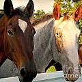 Equestrian Beauties by Beth Ferris Sale