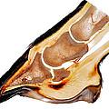 Equine Deep Digital Flexor Tendinitis 30172  by Christoph Von Horst