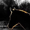 Equine Glow by Steven Milner
