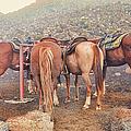 Equine Gossip - Haleakala by Paulette B Wright
