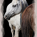 Equine Horse Head And Tail by Daniel Hagerman