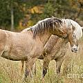 Equine Love by Michael Cummings