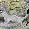 Ermine by FT McKinstry