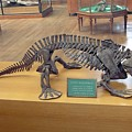 Eryops Skeleton by Pascal Goetgheluck/science Photo Library
