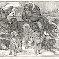 Eskimaux Harnessing Their Dogs To A Sledge by English School