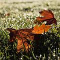 Essence Of Autumn by Georgia Mizuleva
