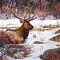 Estes Park Elk by Priscilla Burgers
