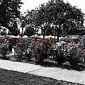 Esther Short Park Rose Garden by Melissa Coffield