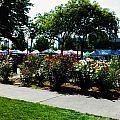 Esther Short Park Rose Gardens by Melissa Coffield