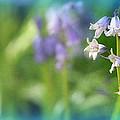 Eternal Spring by Rory Sagner