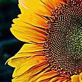 Eternal Sun by Stephanie  Buckley
