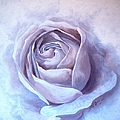 Ethereal Rose by Sandra Phryce-Jones