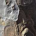 Eucalyptus Bark Abstract by Richard Stephen