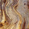 Eucalyptus Bark by Steven Ralser