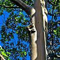 Eucalyptus by Joel De la torre