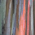 Eucalyptus Tree Bark by Karon Melillo DeVega