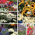 European Flower Market Collage by Carol Groenen