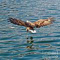 European Flying Sea Eagle 6 by Heiko Koehrer-Wagner