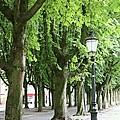European Park Trees by Carol Groenen