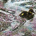 Even The Smallest Leave Ripples In Their Wake by Steve Taylor