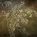Even Weeds Are Beautiful by Terry Rowe
