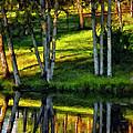 Evening Birches Painted by Steve Harrington