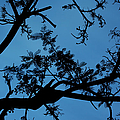 Evening Branches by Charmian Vistaunet