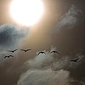 Evening Flight by Donald J Gray