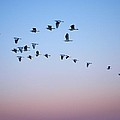 Evening Flight by  Kim Bemis