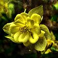 Evening Floral by Deena Stoddard