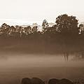 Evening Fog by Cheryl Baxter