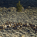 Evening Herd Of Elk   #7640 by J L Woody Wooden