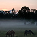 Evening Mist by Cheryl Baxter