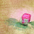 Evening Rosebud by Paulette B Wright