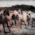 Evening Roundup - Featured In Comfortable Art Group by Ericamaxine Price