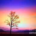Evening Sky by Tara Turner