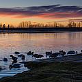 Evening Swim by Nikolai Martusheff