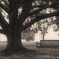 Evening Swing - Oak Tree - Altus Arkansas by Jason Politte