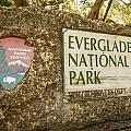 Everglades 01 by Doug McPherson