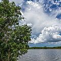 Everglades 0266 by Rudy Umans