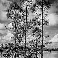 Everglades 0336bw by Rudy Umans